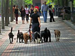 top 6 best saint louis mo dog walkers angie u0027s list