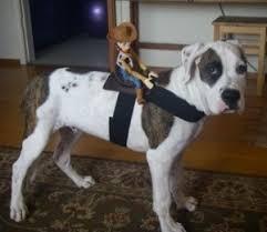Halloween Costumes Horse Halloween Horse Costume Dog Thriftyfun