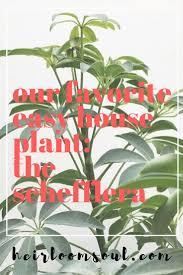 the most poisonous plants in australia hipages com au the 25 best tropical house plants ideas on pinterest tropical