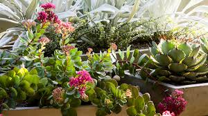 Patio Plants For Sun Container Designs With Succulent Plants Sunset