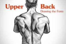 Anatomy Of Human Back Muscles How To Draw Upper Back Muscles Form Proko