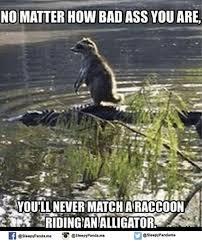 Alligator Memes - 25 best memes about alligator alligator memes