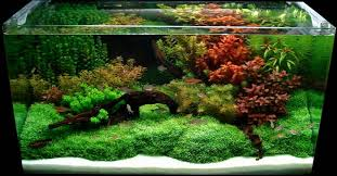 aquascaping layouts with stone and driftwood aquascape design winter is approaching