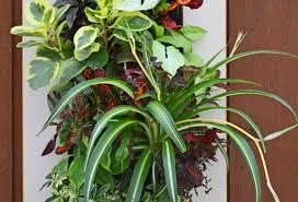 home office living wall garden shawna coronado