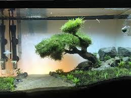 Aquascape Moss Fts 20 Gallon River Aquascape Several Months In Aquariums