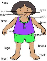 my body parts free download clip art free clip art on