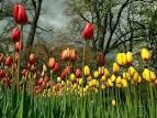 Keukenhof สวนดอกไม้ขนาดใหญ่ที่สุดในโลก| Megamisc