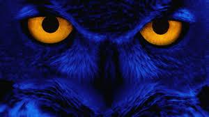 halloween owls weird wallpaper wallpapers browse
