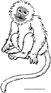 sketsa mewarnai gambar hewan hewan darat sketsa mewarnai