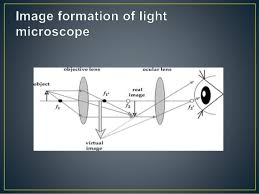 a light microscope image is formed by light microscope