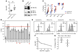 by p d pd 1 blockade decreases bim expression induced by pd l1 in human