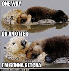 Sea Otter Meme - one way or an otter inotternews com