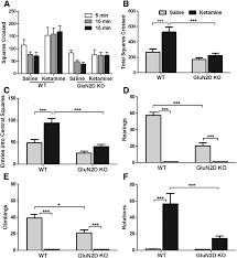 Nevada Abbreviation Related Keywords Amp Suggestions by Glun2d N Methyl D Aspartate Receptor Subunit Contribution To The