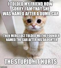 Silly Cat Memes - cute cat meme imgflip