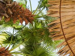 free images nature branch sun palm tree flower summer
