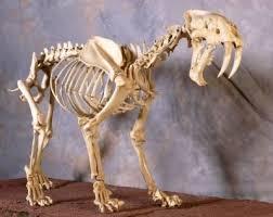 24 ice age animals images prehistoric animals