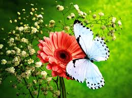 flowers and butterflies pink flower and beautiful blue butterfly