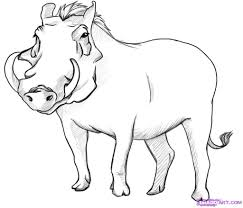 how to draw a warthog step by step rainforest animals animals