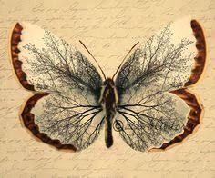 40 best butterfly tree images on butterflies