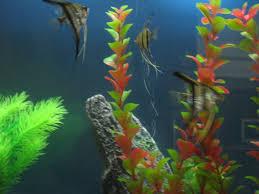 Home Aquarium Home Aquariums On Okinawa U2013 Okinawa Hai