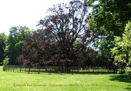 Bad Nauheim Monumentale Bäume Im Kurpark Bad Nauheim Von Holzzäunen Umgeben