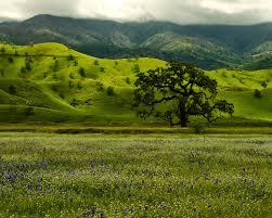 Tejon Ranch Conservancy Blog Managing Grasslands On Tejon Ranch