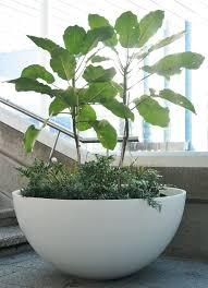 large garden pots nz home outdoor decoration