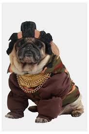 funny dog costumes halloween 70 best pugs in silly costumes images on pinterest animals