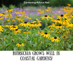 7 easy perennial garden flowers for coastal gardens