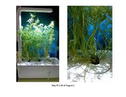 the smart garden testing dill in the smart garden 3 u2013 click u0026 grow