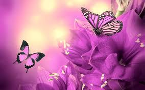 purple flowers butterflies wallpaper