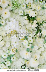 wedding backdrop background wedding flower decoration flower backdrop background stock photo