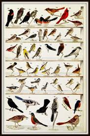 Maryland birds images Winter birds of southern united states jpg