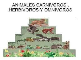 imagenes de animales carnivoros para imprimir increíble imagenes de animales carnivoros herbivoros y omnivoros