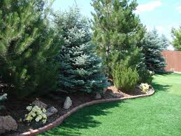 Landscaping Ideas For Backyard Privacy Backyard Privacy Landscaping Ideas Best 25 Privacy Trees Ideas