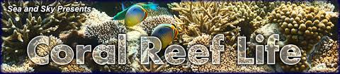 sea worms coral reef life on sea and sky