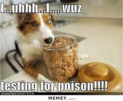 Cookie Meme - dog in the cookie jar memey com