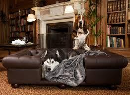 luxury leather sofa bed dog beds sofa korrectkritterscom