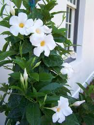here comes the bloom winnipeg free press homes