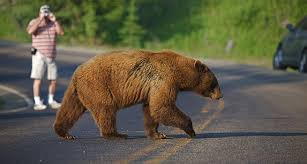 places to see in the united states the ten best places to see wildlife in the united states