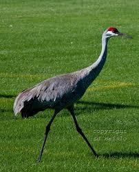 Florida Birds images Birds of florida herons and egrets birds pinterest birds jpg