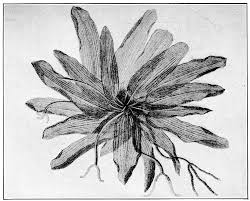 directly transplanting of native monocots from donor areas to the project gutenberg ebook of botany by norman taylor