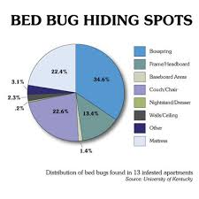 Remedy For Bed Bug Bites Facts About Bed Bugs Vnproweb Decoration