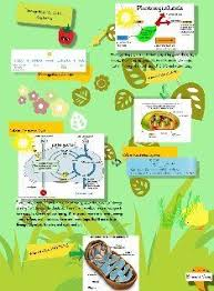 Lab Bench Photosynthesis Cellular Processes Photosynthesis And Cellular Respiration