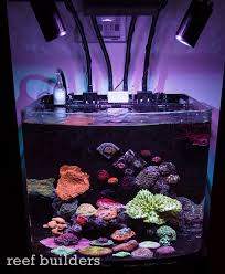 led reef lighting reviews kessil a160we led spotlight review the best gets even better