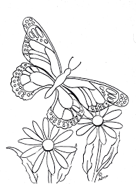 coloring pages for kids by mr adron butterfly coloring page to