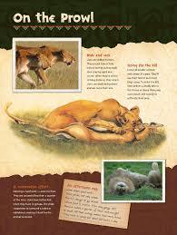 fort wayne children u0027s zoo african journey exhibit u2013 jb wordcraft