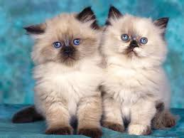 46 top selection of cats pictures