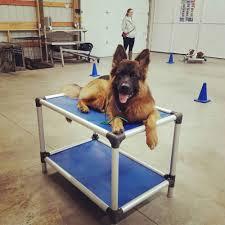 Pvc Pipe Dog Bed Standard Dog Bunk Bed Kuranda Dog Beds