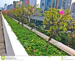 flowering plants in singapore city editorial photography image
